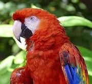 Parrots And Fresh Fertile Eggs For Sale
